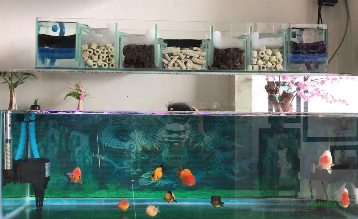 Hệ thống lọc nước bể cá là gì