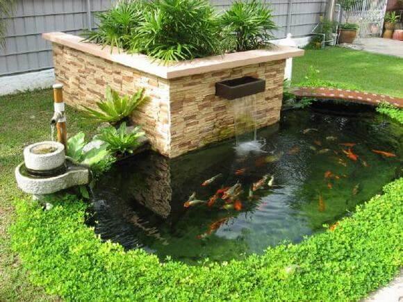 Hồ cá Koi mini là gì?