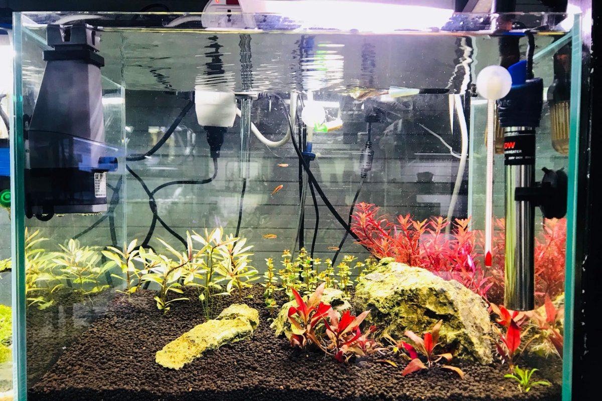 Những lưu ý và cách lắp đặt máy sưởi cho bể cá