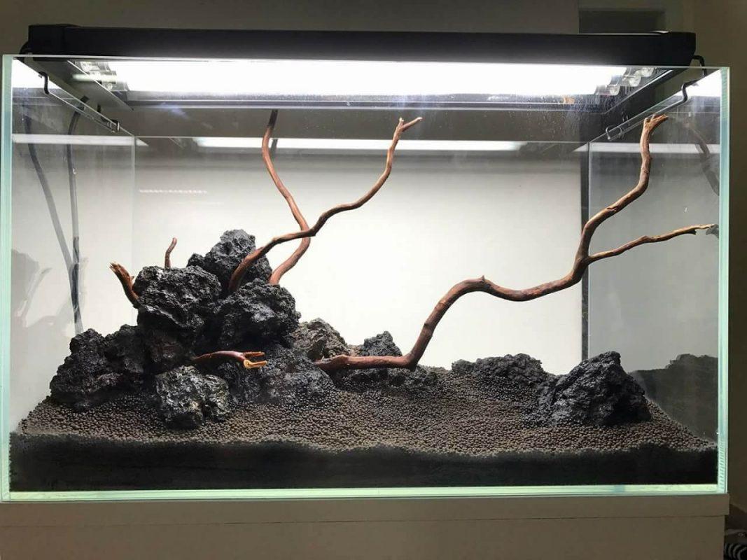 Tác dụng của đá nham thạch đen co bể cá