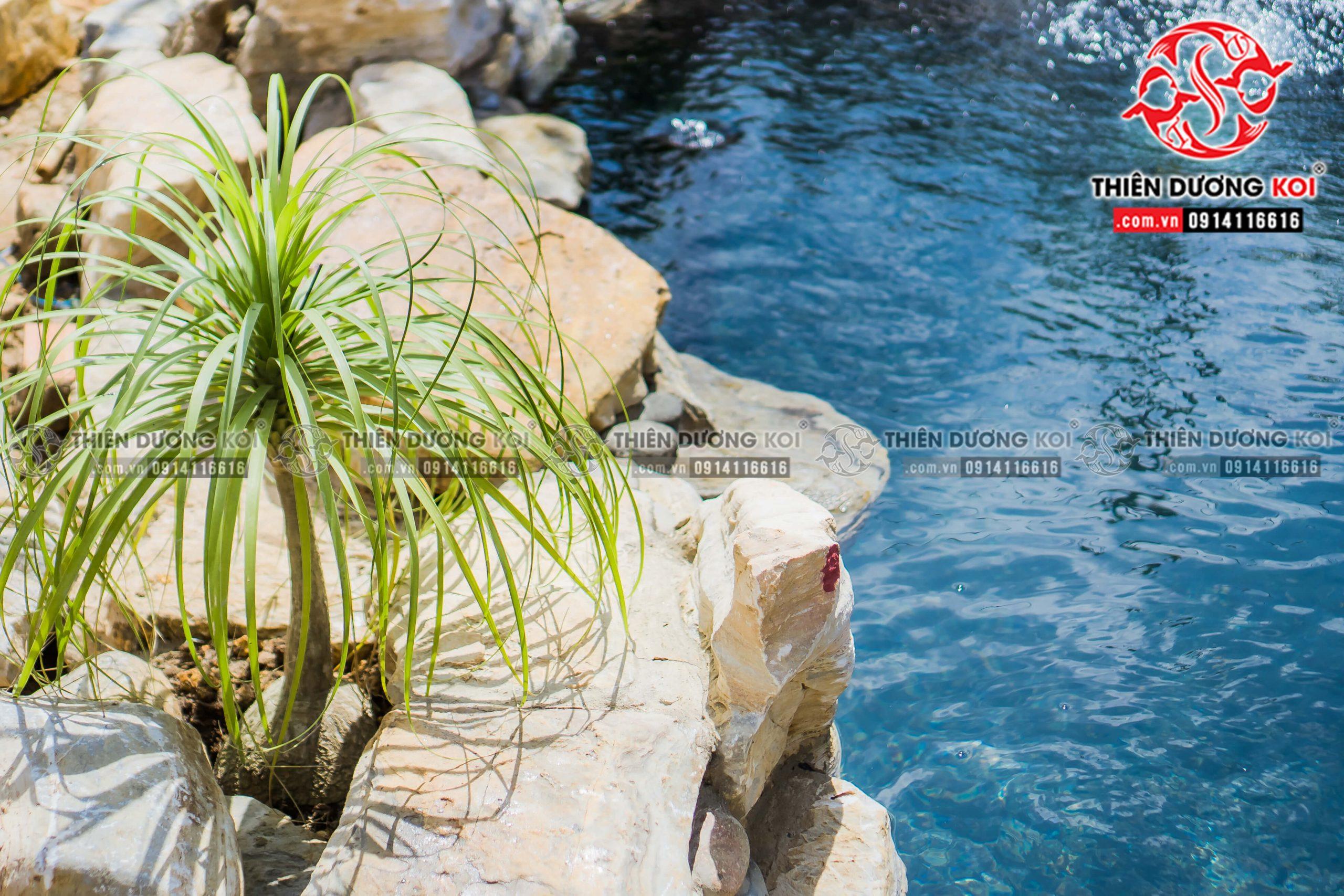 Thiết kế và thi công hồ cá Koi của chị Nhu tại Đà lạt