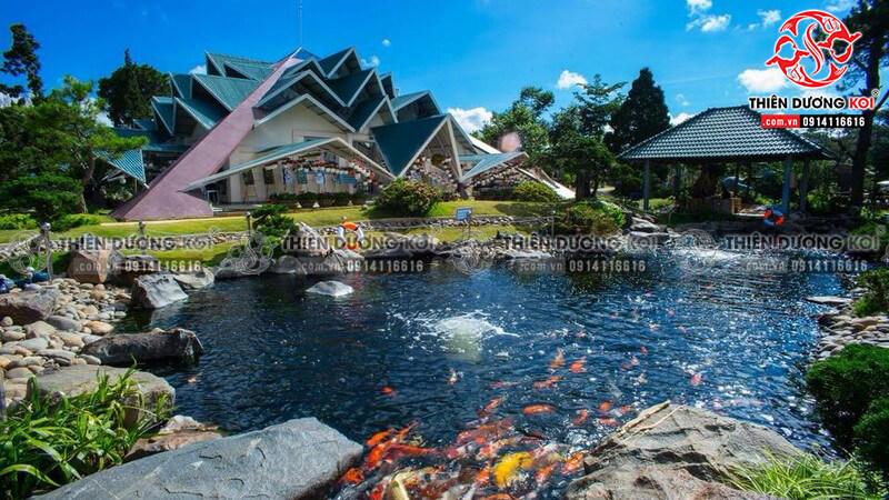 Thiết kế hồ cá Koi tại khu du lịch Lá Phong - Đà Lạt